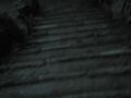 1-Nachtschattengarten