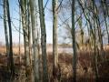 Grenze_Wald