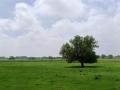 Landschaft_Wiese_Fahrrad_links