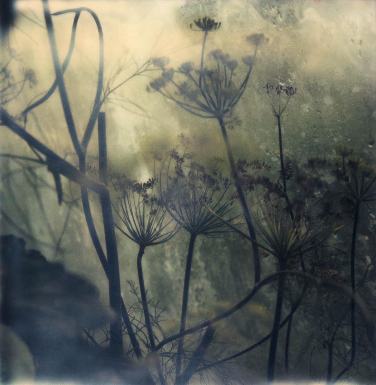 """aus """"Botanische Notizen"""" © Susan Paufler"""
